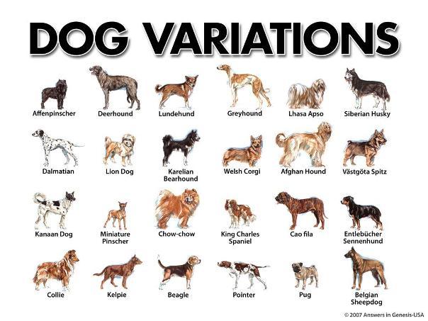 Pound Dog Breeds