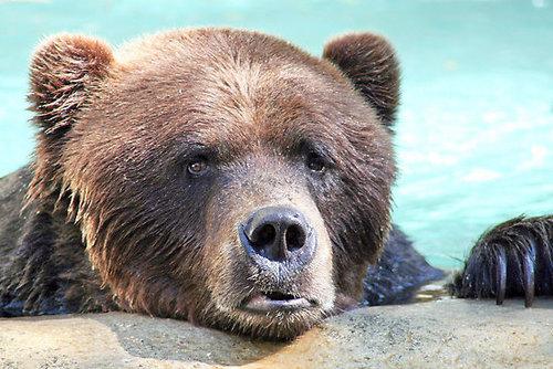 Sad bear guy meme - photo#33