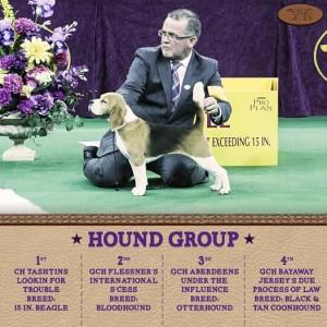 2-16-15 Beagle