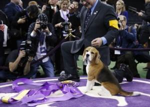 2-18-15 Beagle