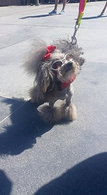 5-2-15 dog with glasses